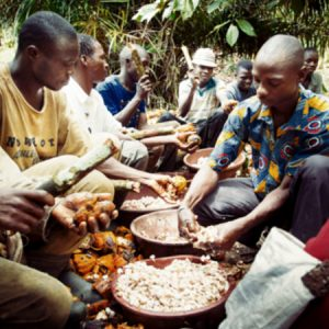 Transparence Cacao CÉMOI
